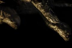 Scotch After Dark (Wilkof Photography) Tags: longexposure light sleeping shadow portrait dog pet home contrast dark lens evening ginger md brittany shadows dof darkness sleep perspective relaxing maryland peaceful canine birddog stretch dreaming le rest doggy scotch 24mm mansbestfriend asleep upclose companion caravaggio k9 vantage lightanddark brittanyspaniel caninecompanion montgomerycounty huntingdog seniordog 18135mm seniorpet canont4i wilkofphotography