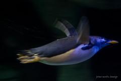 valencia 2016-89 (hiroke636) Tags: valencia mar peces oceano oceanografic