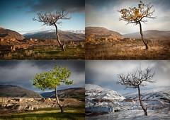 Four seasons Apricot