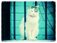La gata de la vecina (patriciamura) Tags: gatos mascotas gatita cuchito