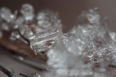 IMG_9382 (nitinpatel2) Tags: macro snowflakes patel nitin