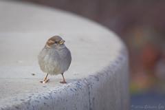 RG_272 ( Ed Lee) Tags: morning portrait color cute green bird contrast spring nikon 7100 bokeh outdoor beak feather richmond finch posture avian warbler 200500 56e