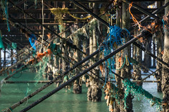 Under the Pier (ShrubMonkey (Julian Heritage)) Tags: sea beach coast pier seaside mess brighton decay rubbish nets tangle palacepier a6000