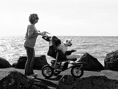 Travelling First Class (Ptolemy the Cat) Tags: people blackandwhite bw dog beach monochrome rocks candid pram breakwater nikond600 nikonf282470mmlens