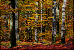 5D-4828-2500 (ac | photo albums) Tags: autumn trees red orange tree fall nature colors yellow forest landscape