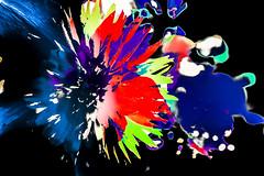 Fusin floral (seguicollar) Tags: flower art arte flor artedigital narciso dalia fusin photomanipulacin imagencreativa virginiasegu fusinfloral