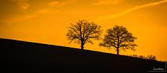 2 arbres au couchant (icodac) Tags: backlight canon soleil ciel contrejour ombres gers soleilcouchant eos70d nogaroulet