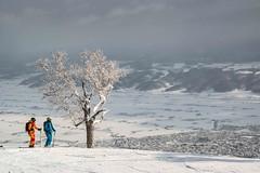Furano ski resort 2016 (Furano Tourism Association in Hokkaido, Japan) Tags: snow ski japan belt women hokkaido prince off powder downhill resort alpine backcountry skier touring piste gully kitanomine
