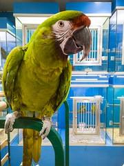 In the Oisellerie du Pont Neuf. The Bird & Pet shop. Paris. France. (Valrie_de_Paris) Tags: pet paris france bird shop du pont neuf the in oisellerie