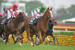 Realista -Fuchu Stakes (arumckF) Tags: tokyo  staygold horserace realista    yugakawada noriyukihori   tokioreality fuchustakes