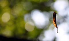 Hanging by a silver thread (RJAB2012) Tags: autumn leaf alone bokeh web 100v10f