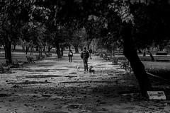Despues de la lluvia (Medigore) Tags: chile parque santiago blancoynegro 50mm lluvia arboles personas animales 50 canont3i