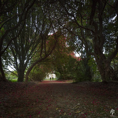 Kilmacurragh... (fearghal breathnach) Tags: flowers trees light red colour silhouette square spring couple rhododendron squareformat framing kilmacurragh kilmacurraghbotanicgardens
