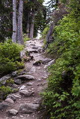 Watch Your Step (SlinkyBlue89) Tags: nature forest 35mm nikon grand national wyoming teton 18g d80