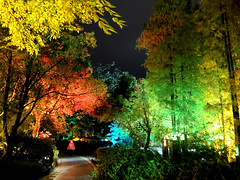 Colorful trees (MelindaChan ^..^) Tags: china light tree night colorful riverside guilin mel melinda 漓江 lijiang guangxi 桂林 廣西 chanmelmel melindachan