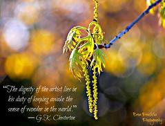 The Sense of Wonder (~ Bron ~) Tags: trees inspiration nature wonder bright bokeh inspire bron bronpraslicka