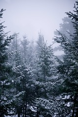 foggy afternoon (jakobnewman) Tags: trees sky fog pine colorado rockymountains spruce