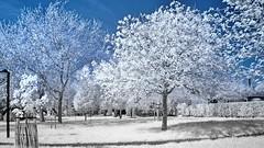 Landscape IR (Yasmine Hens) Tags: trees landscape ir nikon europa flickr belgium ngc arbres infrared namur hens yasmine wallonie 720nm infrarouge nikond90 iamflickr flickrunitedaward hensyasmine