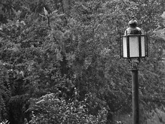 lluvia en blanco y negro (Mariano Montes) Tags: planta blancoynegro rain photography blackwhite lluvia plantas photographie bn farol fotografia blanconegro lluvioso