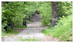 Into the woods (Gi_shi) Tags: wood nikon sentiero bosco nikonitalia iamnikon d7200