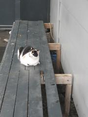 Play Day, Hampton Downs Motor Sport Park. (ceebee05) Tags: cat playday hamptondownsmotorsportpark