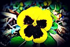 Flower (DustinPittman1) Tags: dustin