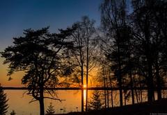 Sunset composition (firetys) Tags: trees sunset sky sun lake nature water weather silhouette landscape nikon dusk d810