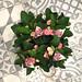 Plantas con flores: FloryFauna