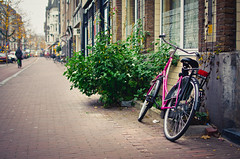 Tyred (GaryTumilty) Tags: street pink plant holland green amsterdam bike bicycle lights bush magenta parked left cobbles chained
