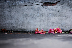 . (LauraKiora) Tags: flowers urban london petals 28mm may ground richmond lookdown brokenlens effrastillness
