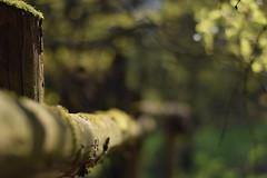 Begrenzung (mdw2704) Tags: wood weide dof bokeh zaun holz moos emsland polfilter emsbren