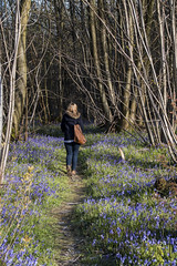 Sandie WalkingWalking amongst the Bluebells (marc_morris1982) Tags: wood uk flowers blue trees wild england nature bluebells bells canon woodland landscape outside outdoors evening kent spring woods afternoon purple exercise forrest outdoor walk sigma sunny kings trunks dslr wildflower canondslr canoneos 18200 springtime kingswood aonb 18200mm challock sigma18200 sigma18200mm areaofnaturalbeauty sigmadc canon70 canonuk canon70d eos70d eos70 dc18200 kaonb
