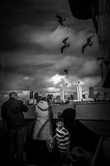 on the ferry (efrainsalvadorjr) Tags: blackandwhite bw ferry skyline zeiss landscape 28mm sonycamera blackandwhitephotography sandiegoskyline carlzeiss landscapephotography sonyalpha a7r biogon28mm mflens sandiegoferry adaptedlenses sonya7r
