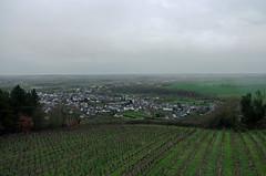 Saint-Aubin-de-Luign (Maine-et-Loire) (sybarite48) Tags: france wino vine vin vinho vigne vino vite  wein vini sine wijn  maineetloire videira weinstock vid  asma arap    wijnstok winorol    saintaubindeluign