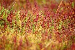 Schiermonnikoog im Herbst
