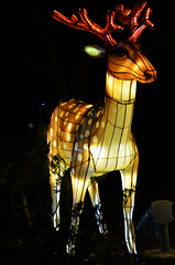 Deer Lantern (pokoroto) Tags: autumn canada calgary october deer alberta lantern 10 2015     kannazuki   themonthwhentherearenogods 27
