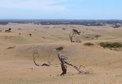 - (_barb_) Tags: tree rural australia arid paddock boneo