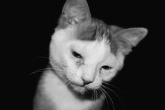 Rusty (morganyanez) Tags: orange white black cute up animals cat nikon kitten pretty close sweet tabby kitty whiskers mm 35