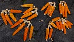Corn (Py All) Tags: nepal trek corn asia asie pokhara annapurna mas nayapul