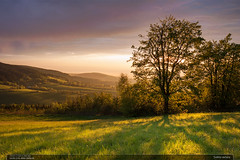 Svtlo veera (jirka.zapalka) Tags: trees sunset grass clouds landscape evening czech meadow bilekarpaty