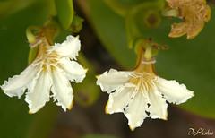 DSC_1919.NEF (DigiPhotus) Tags: flowers flores flower fleur fleurs flor blumen fiori blume blommor fiore bloemen blomster blum bloem flors blm blomer flos flori floroj blthanna digiphotus