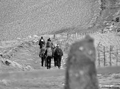1 (Nicola Dell Photography) Tags: uk winter nature birds garden photography landscapes nicola wildlife derbyshire sheffield dell tor mam walkers castleton 2016 2015 s12 hackenthorpe