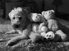 Three musketeers (Eric.Ray) Tags: dog white black canon project three photo 365 eosm 42365