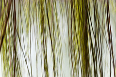 20160306-sile68.jpg (christine thormhlen) Tags: nature icm trauerweide