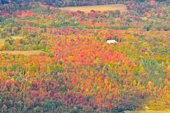 Kaleidoscope (kirstenscamera) Tags: autumn house mountain ny newyork color fall outside outdoors rainbow nikon path walk hike foliage trail valley summit land catskills multicolored chimera kaleidoscopic hudsonvalley polychromatic catskill3500