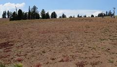 Dutton Ridge, Mount Mazama, Oregon (lotos_leo) Tags: travel summer nature oregon landscape nationalpark outdoor cascades craterlake cascaderange rimdrive mountmazama путешествие национальныйпарк орегон crossamerica2015 поамерике мазама крейтерлейк нэшнлпарк duttonridge
