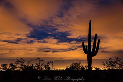Desert Magic (Arizphotodude) Tags: longexposure sunset arizona cactus sky cloud nature landscape outdoors lights nikon cityscape dusk d750 saguaro cloudporn naturephotography vividcolor nikond750