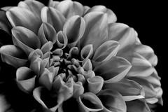 20160422_0012 (teufelkamera) Tags: flower macro tube extention kenko