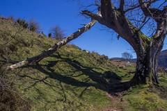 ItsusikoHarria-26 (enekobidegain) Tags: mountains montagne monte euskalherria basquecountry pyrnes pirineos mendia paysbasque nafarroa pirineoak bidarrai itsasu itsusikoharria