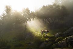 Maanas de sol y niebla ... (Vctor.M.Chacn) Tags: paisaje perro niebla fz1000 dmcfz1000 vctormchacn